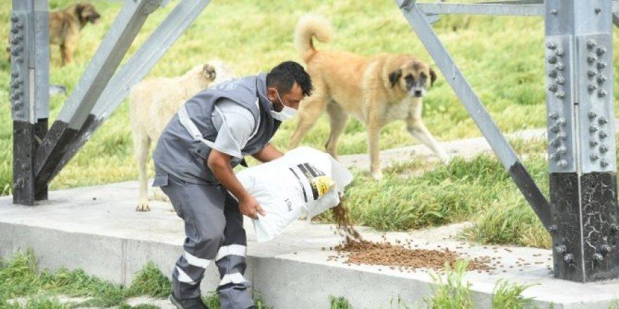 Konya'da sokak hayvanları bayramda da yalnız bırakılmadı