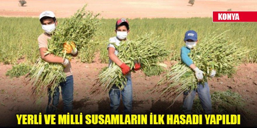 Konya'da yerli ve milli susamların ilk hasadı yapıldı