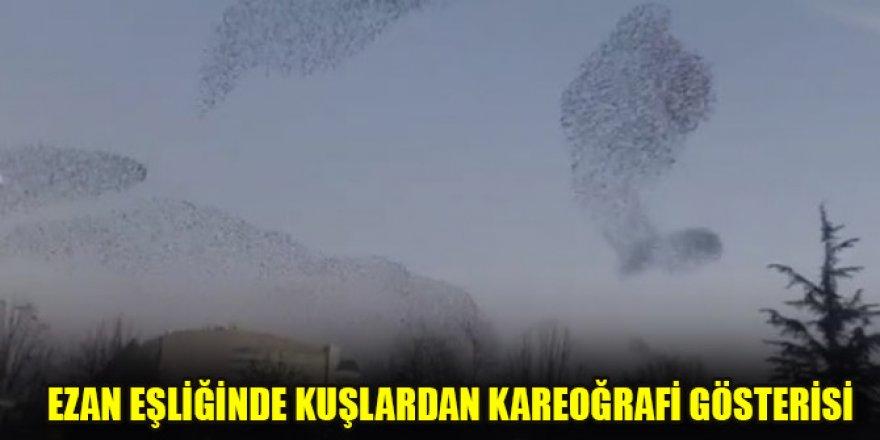 Ezan eşliğinde kuşlardan kareoğrafi gösterisi