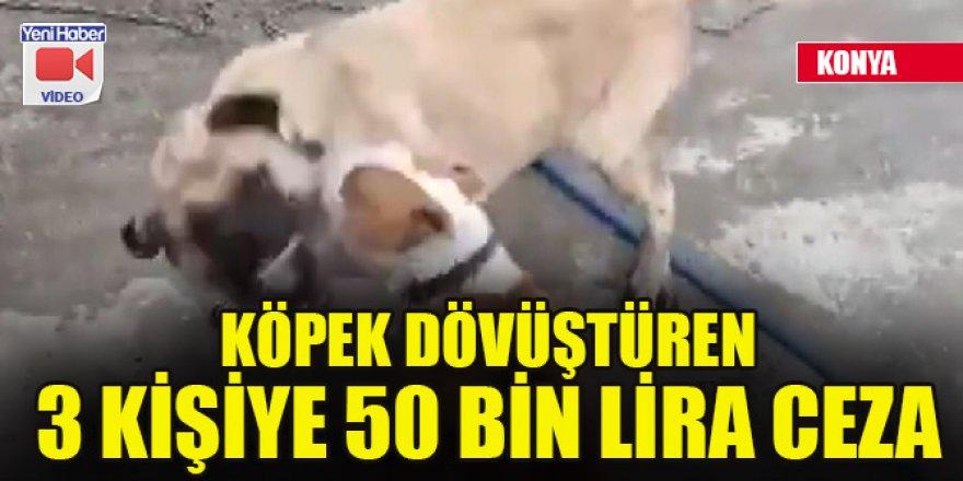 Konya'da köpek dövüştüren 3 kişiye 50 bin lira ceza