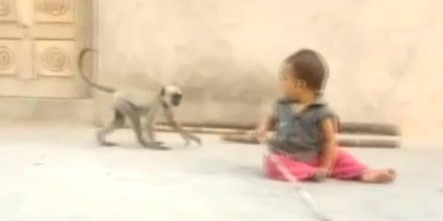 Maymun sadece oynamak istedi ama...