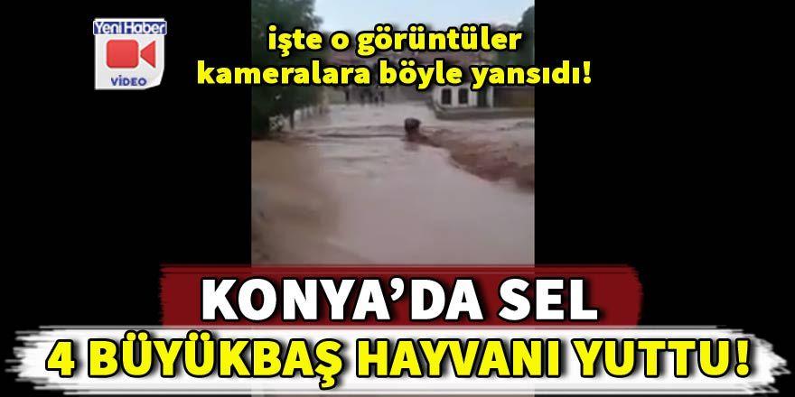 Konya'da sel baskını: 4 büyükbaş hayvan sele kapılarak telef oldu