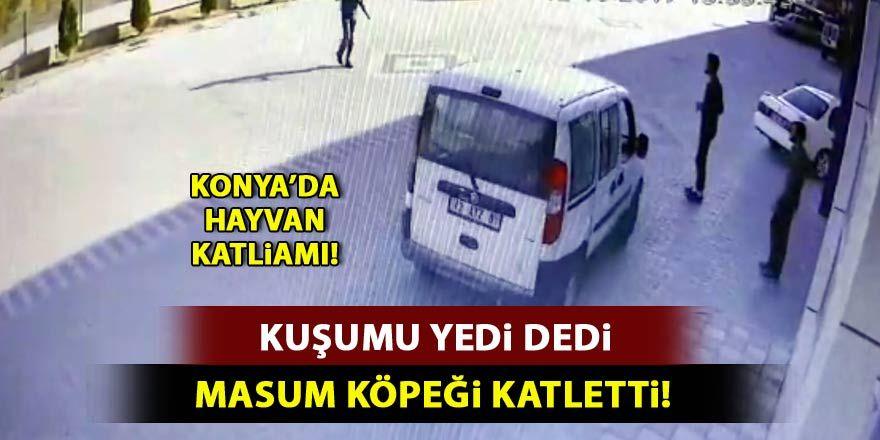 """Konya'da sokak köpeğini """"kuşunu yediği için"""" tüfekle vurmuş"""