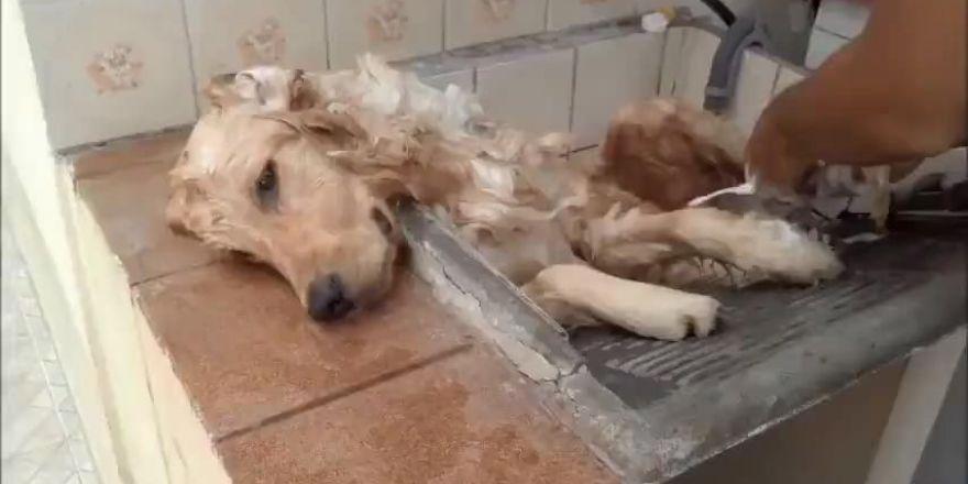 Yıkanırken kendinden geçen köpek